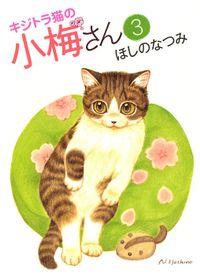 キジトラ猫の小梅さん / 3