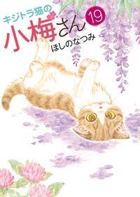 キジトラ猫の小梅さん / 19