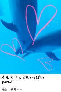 イルカさんがいっぱいpart.3