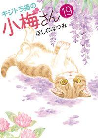 キジトラ猫の小梅さん (19)