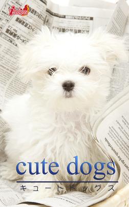 cute dogs31 マルチーズ-電子書籍