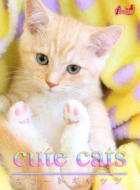 cute cats04 マンチカン