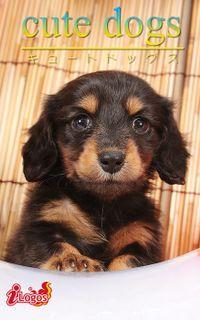 cute dogs25 ダックスフンド