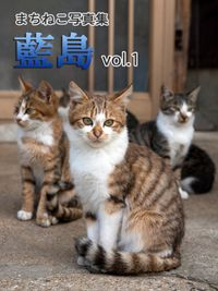 まちねこ写真集・藍島 vol.1