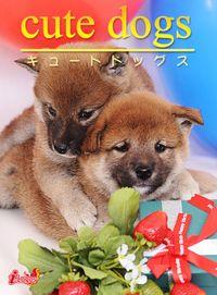 cute dogs05 柴犬