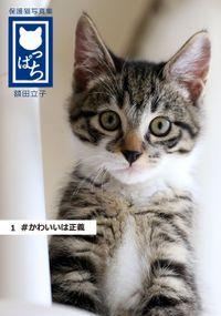 保護猫写真集 ねこっぱち!
