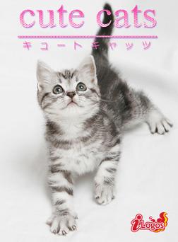 cute cats03 アメリカンショートヘア-電子書籍