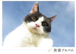 旅猫アルバム-電子書籍