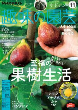 NHK 趣味の園芸 2020年11月号-電子書籍