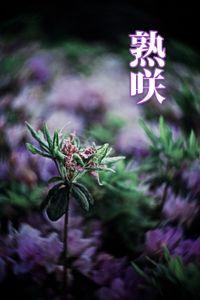 熟咲(月刊デジタルファクトリー)