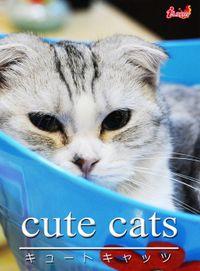 cute cats01 スコティッシュ・フォールド