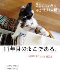 まこという名の不思議顔の猫 11年目のまこである。