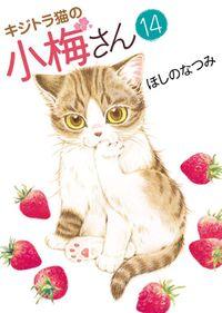 キジトラ猫の小梅さん(14)