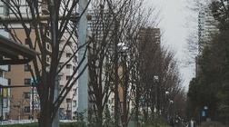 街路樹の不満-電子書籍