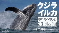 クジラ・イルカ デジタル生態図鑑