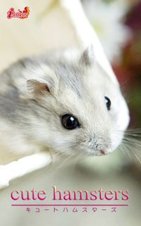 cute hamsters02 ジャンガリアンハムスター