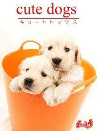 cute dogs19 ゴールデン・レトリバー