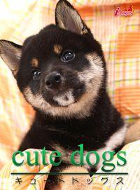 cute dogs07 柴犬