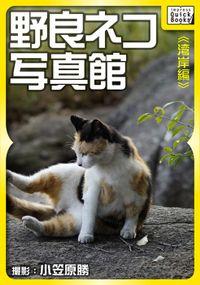 野良ネコ写真館【湾岸編】