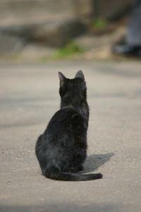 野良ネコ『クロ』と飼い猫『ミケ』