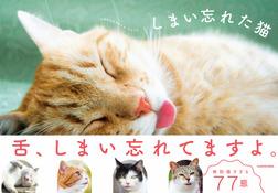 しまい忘れた猫-電子書籍