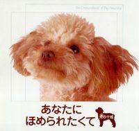 あなたにほめられたくて : 犬の十戒