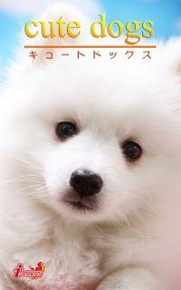 cute dogs30 日本スピッツ