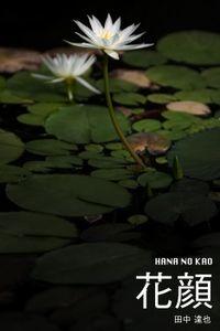 花顔 HANA NO KAO