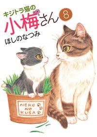 キジトラ猫の小梅さん / 8