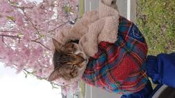 奇跡の猫    みにゃん-電子書籍