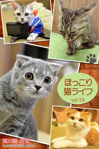 ほっこり猫ライフ vol.19