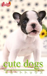cute dogs21 フレンチブルドッグ