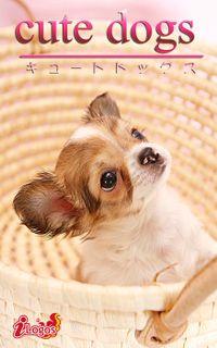 cute dogs18 チワワ