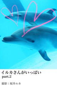 イルカさんがいっぱいpart.2