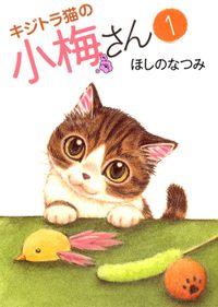 キジトラ猫の小梅さん / 1